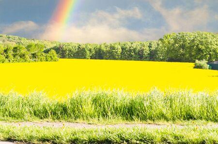 Yellow flowering Rapsfeld blue sky. Landscape in the background a rainbow.
