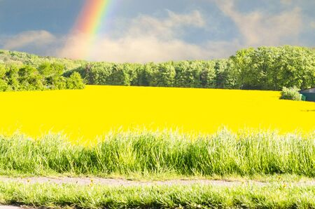 rainbow sky: Yellow flowering Rapsfeld blue sky. Landscape in the background a rainbow.