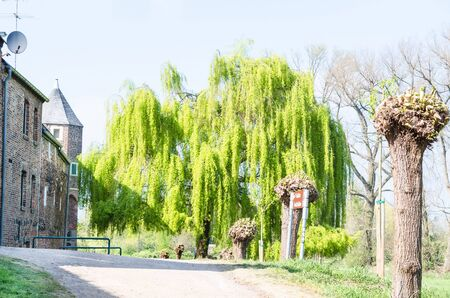 weeping willow tree: Beautiful large weeping willow outside the city walls of Zons am Rhein, Germany. Stock Photo