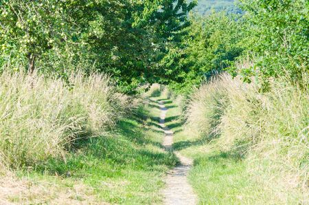 defile: Defile the beaten hiking trail in sunshine