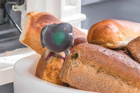 bread basket: Paloma en una gran cesta de pan delante de una panader�a, de comer el pan.