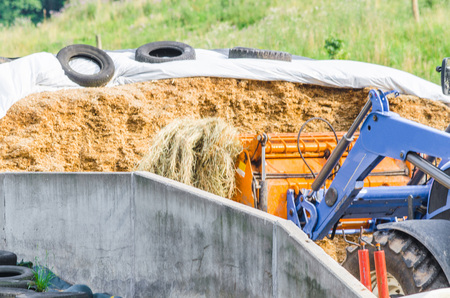 compacted: Silage compacted well in the absence of air with white plastic film. Stock Photo