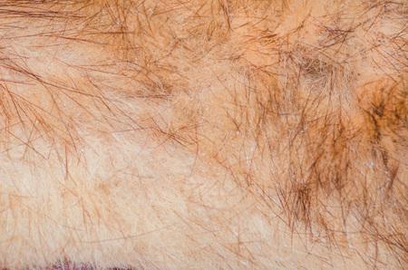 animal fur: Closeup of a animal fur texture as background, texture.