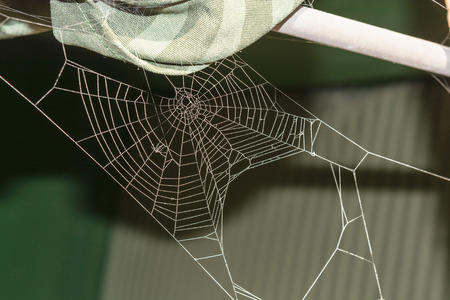 spider web: The spider web (cobweb) closeup background.