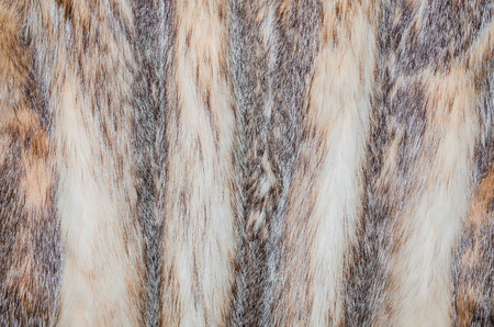 silver fox: Closeup of the fur of a silver fox. Stock Photo
