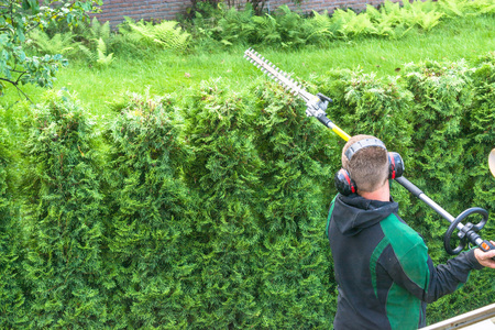 hedges: Professional hedges cutting with gasoline telescopic hedge trimmer.