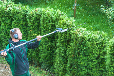 Cutting a hedge with a hedge trimmer motor. Фото со стока