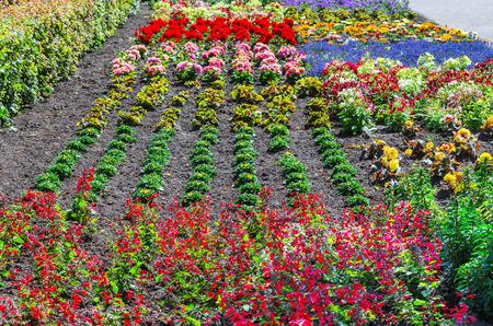 plants species: Colorato letto di fiori colorato con molte specie diverse di piante