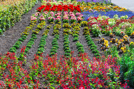 plants species: Colorful colorful flower bed with many different species of plants