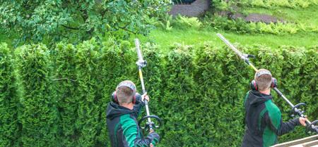 Panoramisch beeld van het snijden van een heg met een heggenschaar motor. Stockfoto