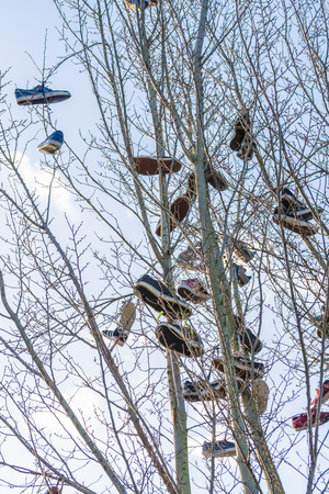 tossing: Hattingen, Nrw, Germany - January 4, 2015: Shoes hanging in the air, dangling from an old tree. The so-called shoe tossing, or shoefiti should be due to an old Scottish Tradition.