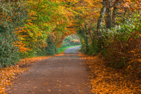 forest path: Indian Summer, forest path in the Fall Stock Photo