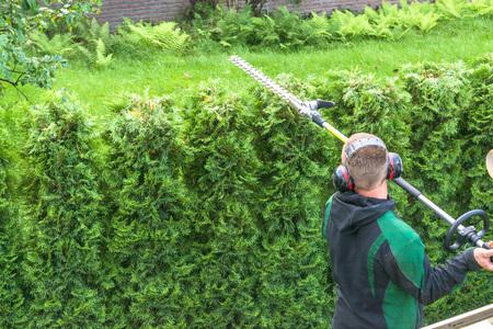 헤지 트리밍, 정원에서 작동합니다. 직장에서 전문 정원 도구와 전문 정원사.
