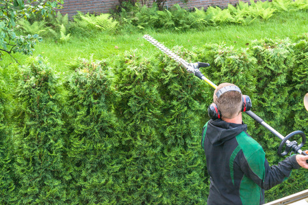 Hedge trimming, works in a garden. Professional gardener with a professional garden tools at work.