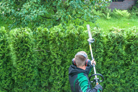 trimmed: Hedges cutting with gasoline telescopic hedge trimmer.