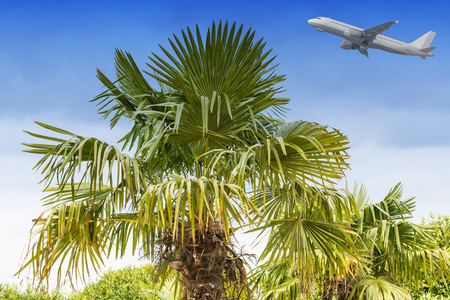 takeoff: Large palm tree against a blue sky in the background, a take-off passenger airliner.