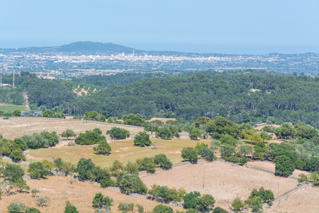 agricultural area: Agricultural area with olive grove in Majorca, Spain