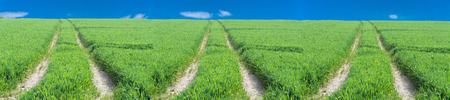 dramatically: Three tractor tracks through a green agricultural field in spring, Scenics.