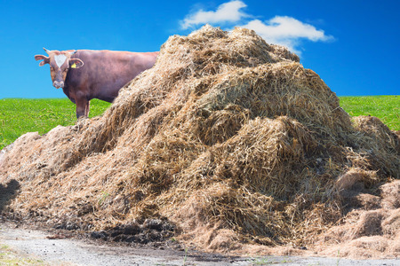 living idyll: A manure pile on a farm in the background a wall of bricks. Stock Photo