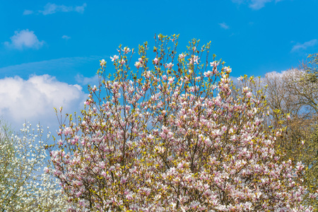 fascinating: Beautiful fascinating spring scene with blue sky.
