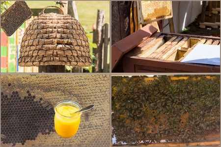 diligente: Beekeeping and honey production workflow: from the harvesting to the finished honey.