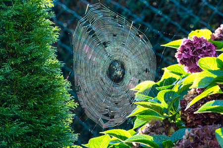 The spiders web or cobweb close up with colorful background.