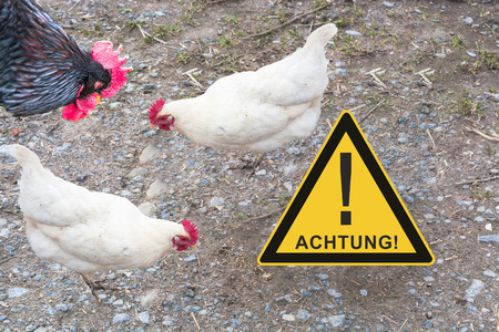 Symbolically general prevention against infections. On the picture warning sign with inscription in english danger and chickens. Concept of avian flu, animal experiments, antibiotics and vaccinations. Stock Photo