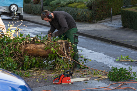 carbon neutral: Forestry worker sawing a tree trunk with a chainsaw and professional tool.