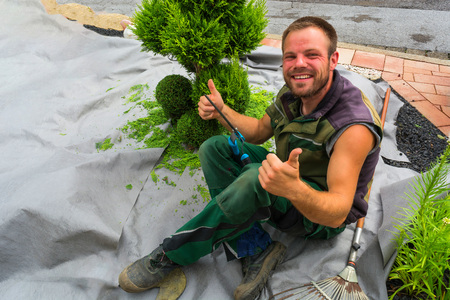 Gardener with a hedge trimmer cutting Thuja or boxwood in shape. Stock Photo