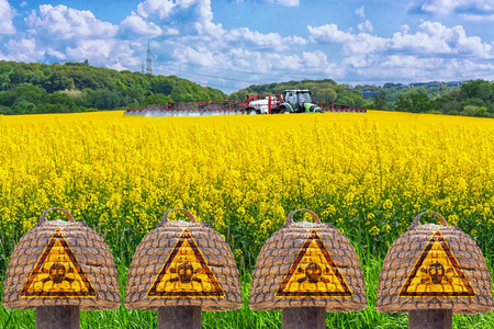 Old hives of straw in front of a blossoming farmer and tractor with sprayer spray rape field insecticide. Symbol for insect killing environmental protection.