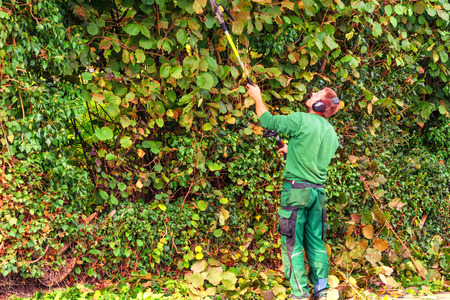 Cutting a hedge with a hedge trimmer motor. Foto de archivo
