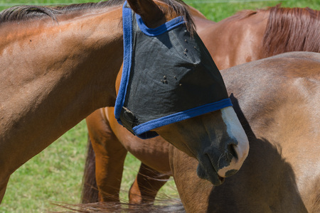 Fly protection mask for horses optimally protects the horse against insect