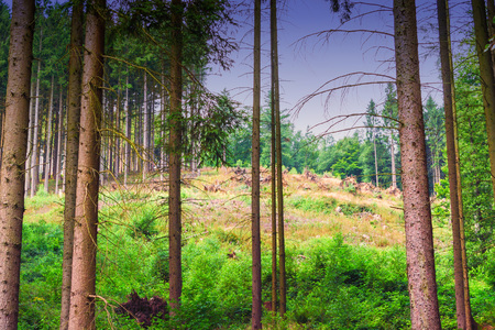 Picturesque viewpoint on a forest clearing in the background felled trees Imagens