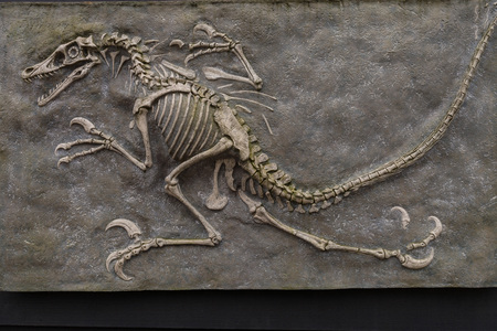 Dinosaur fossil from prehistoric evolution isolated on brown background Imagens