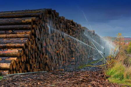 Wood yard business. Wood stacked outdoors. Concept forest industry environment.Felt tree trunks are sprayed with water to protect them against wood pests
