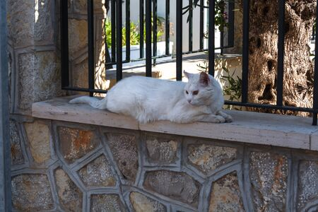 White cat lying on a wall in the town of Sant Elm, Mallorca Spain.
