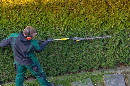 El jardinero corta un seto con un cortasetos de gasolina. Dando forma a una pared de thujas