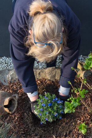 Young woman gardening while planting flowers for the spring