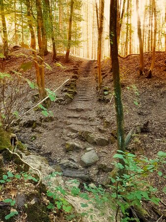 Old stone stairs in the green forest Main motive of this image focus as intended