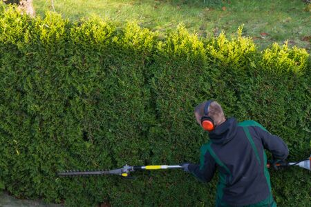 Gardener cuts a hedge with a gasoline hedge trimmer. Shaping a wall of thujas