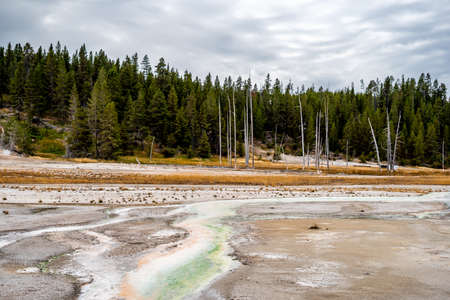 Norris geyser basin and the landscape nature in Yellowstone national park in Wyoming , United States of America Banque d'images