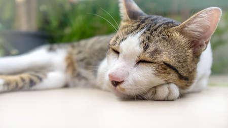 Sleeping funny cat. Stock fotó