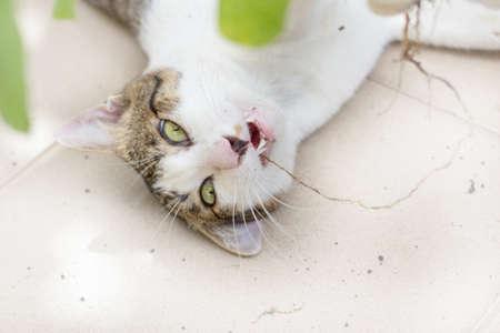Funny cat enjoys its catmint. photo