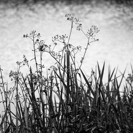 Weeds and grasses on water reflection background. photo