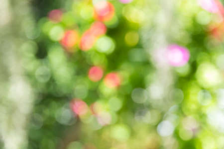 Abstract green bokeh background. photo
