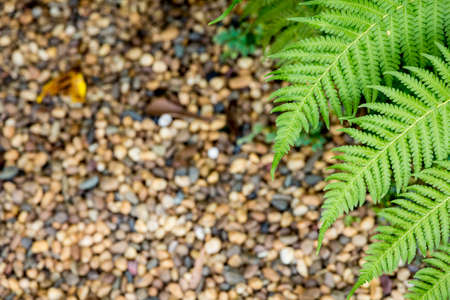 pebble: Ferns on pebble background. Stock Photo