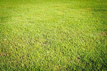 Grass field texture for background. Stock fotó
