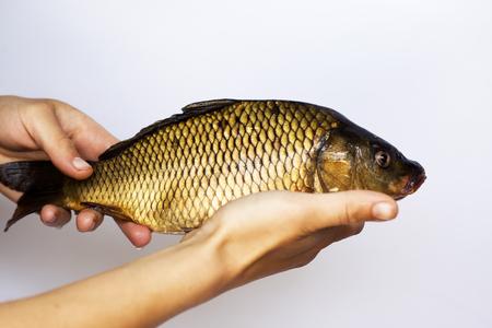 Carpa di pesce di fiume vivo in primo piano in mano