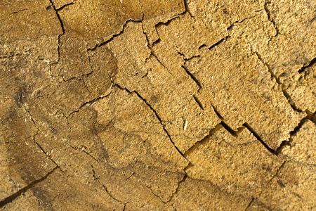 cracked dry oak texture oak stump background close-up