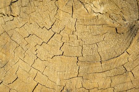 cracked dry oak texture oak stump background close-up
